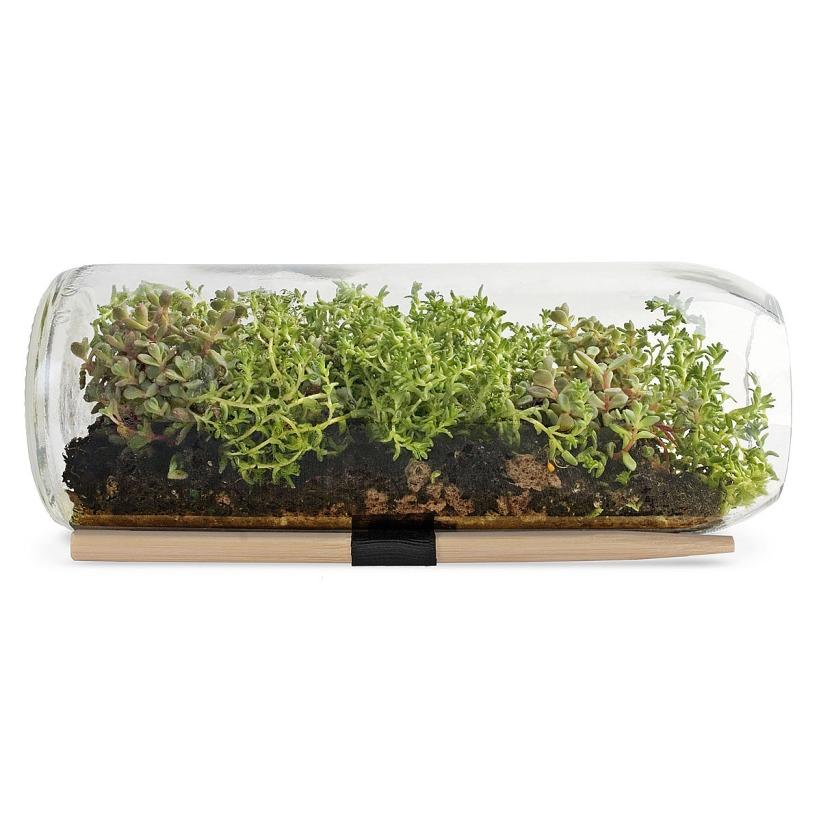 Sedum Terrarium Bottle ($38): http://shopstyle.it/l/023
